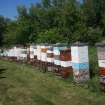 Orticaria di Jeff Paulsen in Manitoba all'inizio di luglio.
