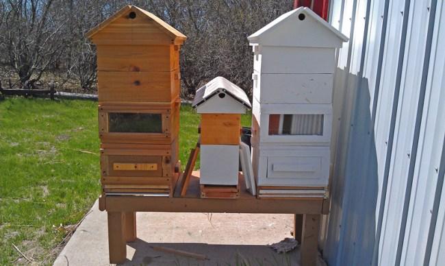 Beehive-1-Sirovy-800-px
