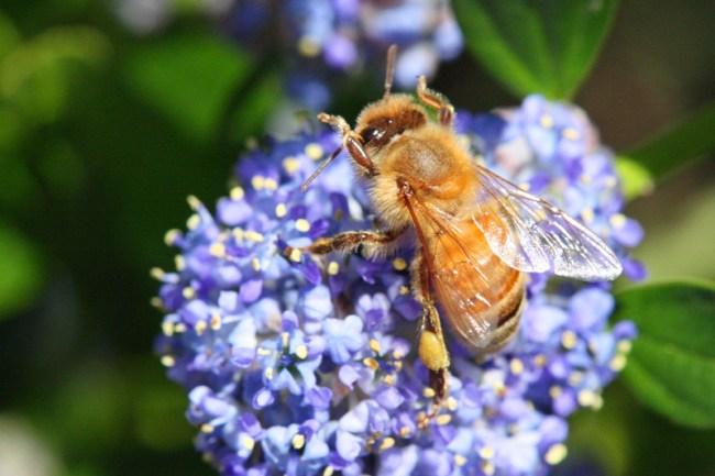 Referee-bee