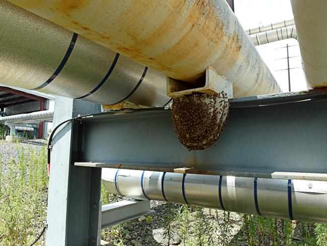 Refinery bees. © Debbe Krape.