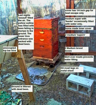 Scott-Mathews-robbing-bees-3
