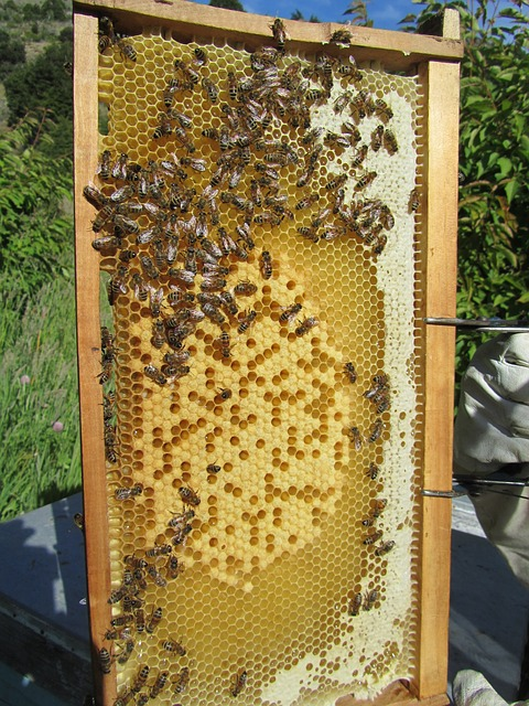 Frame of bees vertical