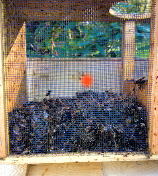 Dead-bees-William-Hesbach-May_4_2013