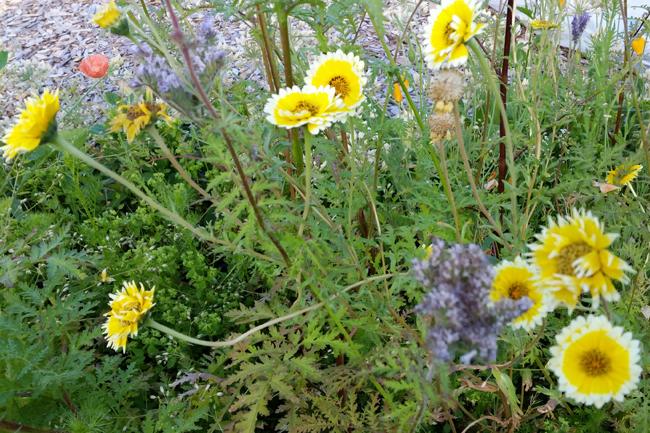 Jesslyn-Howgate-yellow-bee-flowers