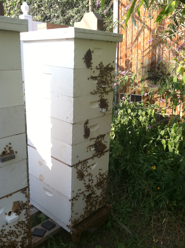 TonyBees-hive-with-platforms