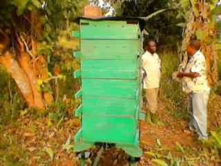 Hive in Uganda. Nicholas Mbugua.