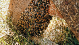 Hive or colony: what is the difference?