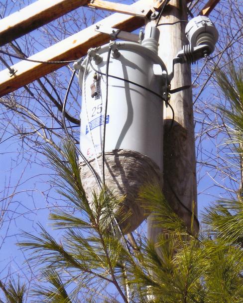 Hornet nest on transformer.