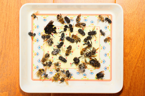Tray-where-I-put-the-dead-bee.
