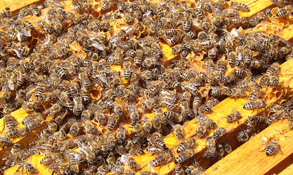 Bees-in-hive. It is easy to lose a colony in spring.