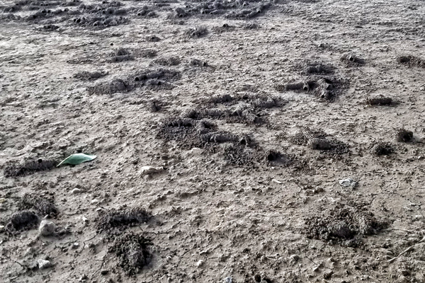 Digger bees spend about 10 months buried in the soil.