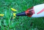 Mini-bee-vac cleaning a dandelion.