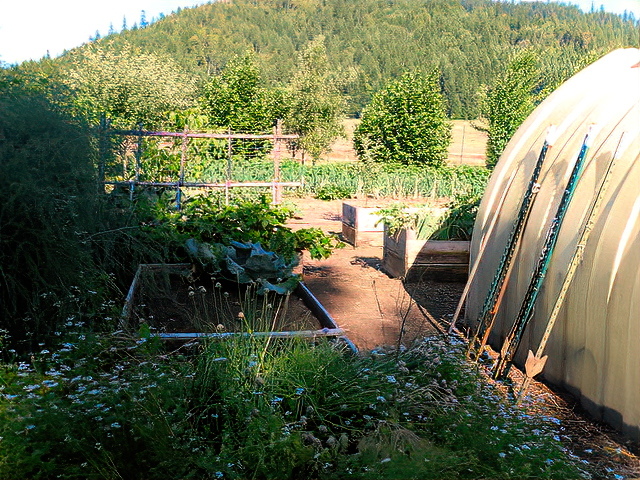 The orchard and truck garden will soon be planted for bees.  © Gill Jacobson