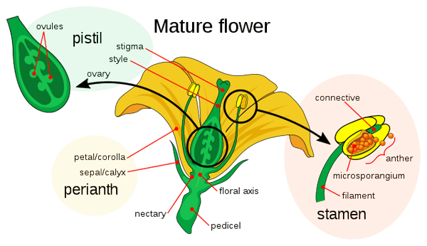The parts of a flower.