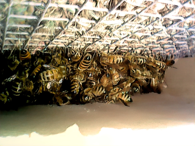 This is a small cluster of bees sitting just above the candy cake in my white condo.