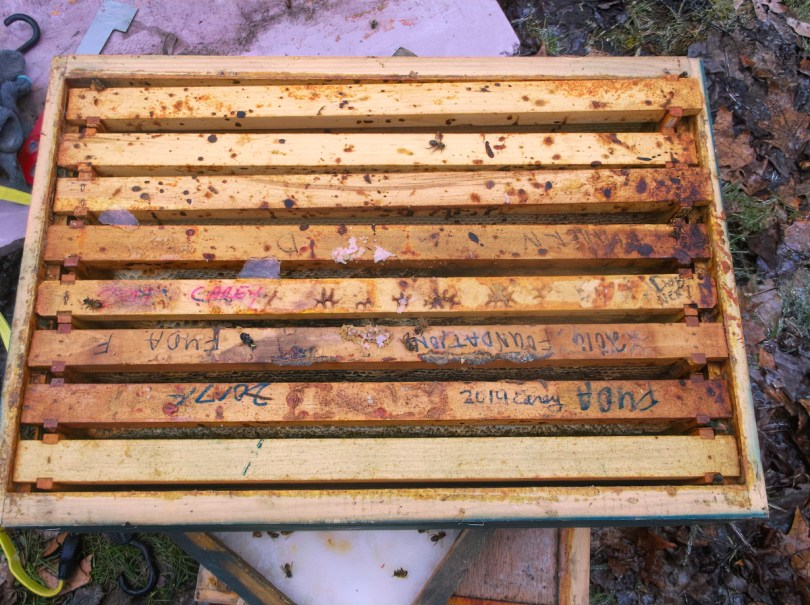 In this example of honey bee dysentery, you can see bee feces that was deposited on the top bars. This colony could also have nosema, or not, so testing is required.