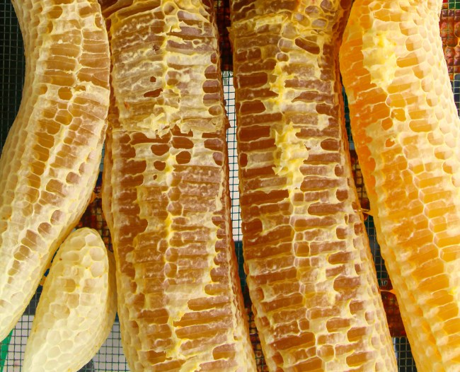 Some of the best comb honey can be found in the form of burr comb. These pieces were built quickly, filled to capacity, and contain no foundation.