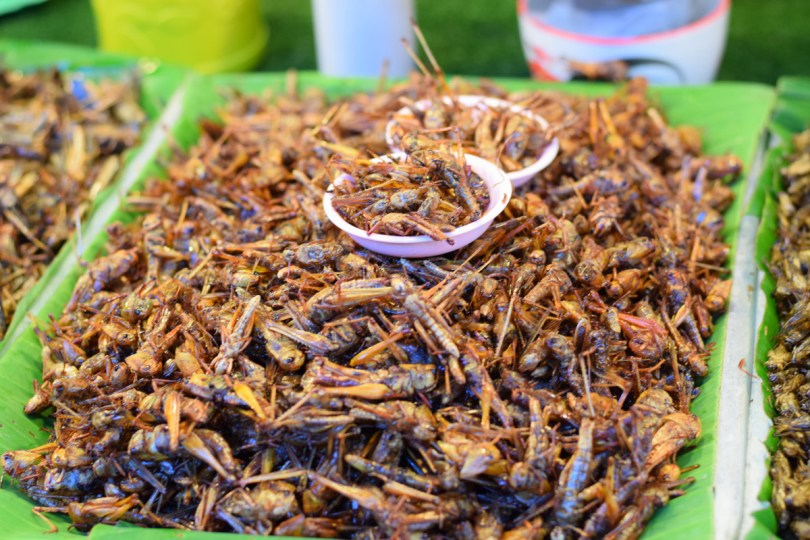 In some countries, deep-fried crickets are a popular food item.