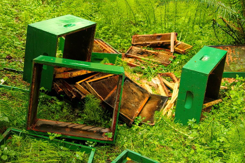 Some of the hives were simply being stored in place, so not all hives contained bees this past winter.