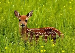honeymoon packages in kerala deer
