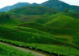 kerala honeymoon packages hillstation