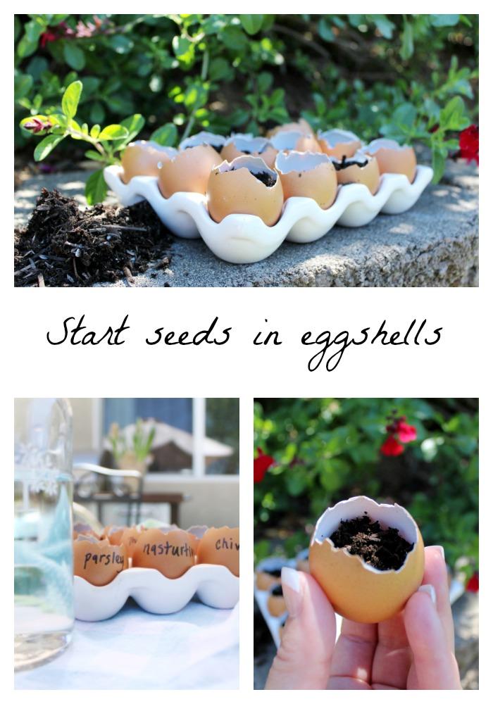 Start seeds in eggshells | spring gardening | organic gardening