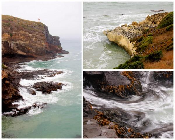 otago peninsula wildlife