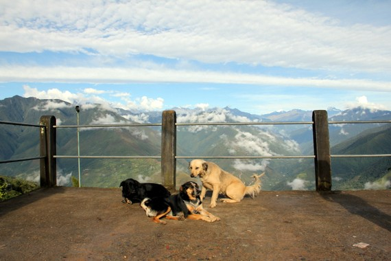 dogs of coroico bolivia