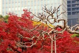 ancient tokyo gardens