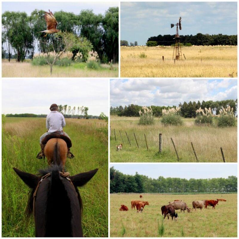 Candelaria del Monte horseback riding