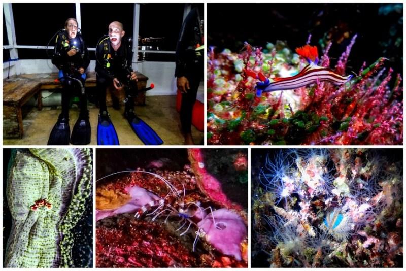scuba diving komodo indoesia night dives