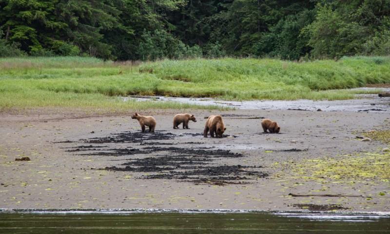 British Columbia Bear Watching