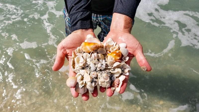 Shelling in Sanibel Island