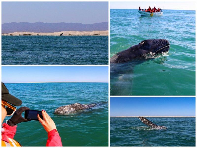 Oje de Liebre Whale Watching