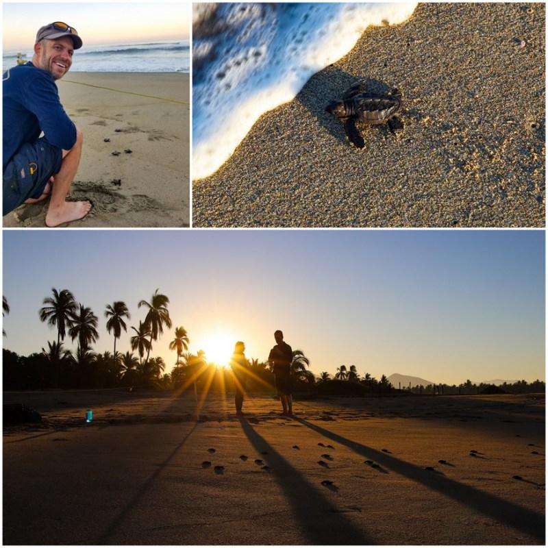 tortuga viva mexico