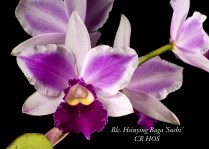 Honolulu Orchid Society Certificate of Recognition 78.0 points Lea Takafuji 09Jun11 Aiea Orchid Club Show