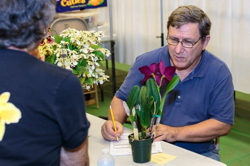 Bob Moffitt, Chairman of the HOS Judging Panel, carefully scrutinizes one of the plants judged.