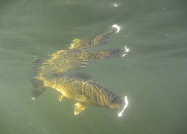 Finding fall walleye in natural lakes
