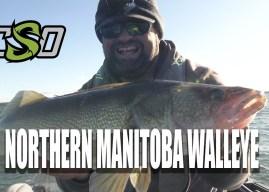 Northern Manitoba Walleye