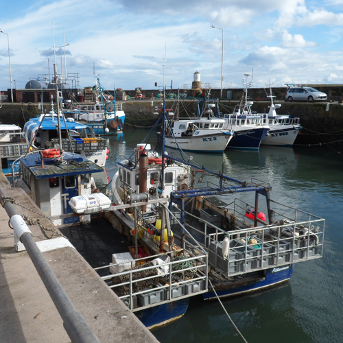 Creel Boats at Pittenweem