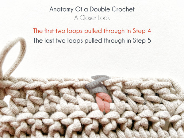 """A swatch of double crochet in taupe color is tilted slightly forward to show the top of the stitches of the last worked row. There are four lines of text on the photo. Line one reads: """"Anatomy Of a Double Crochet."""" Line two reads """"A Closer Look."""" Line three in red reads """"The first two loops pulled through in Step 4.'"""" Line four in blue reads """"The last two loops pulled through in Step 5."""" The corresponding parts are marked in red and blue on a double crochet from the middle of the row."""