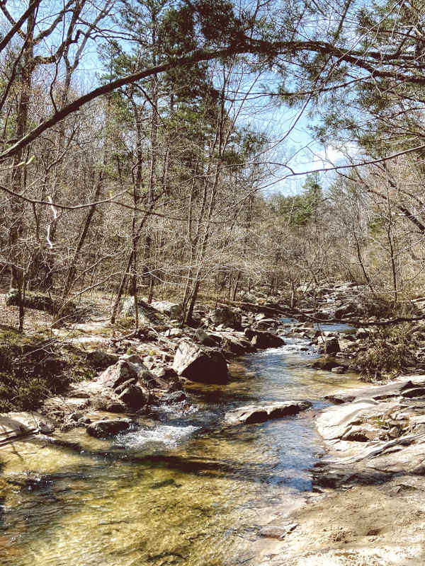 Pickle Creek runs clear through the budding spring hardwoods and pine trees of Hawn State Park, rocks jutting out of the water and running along the banks.