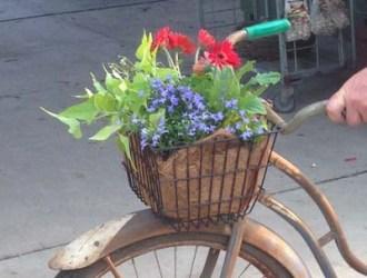 Bicycle Planter Closeup