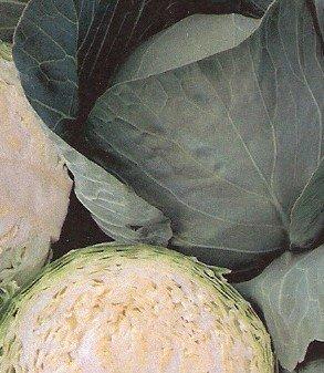 Cabbage: Bravo