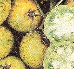 Tomato: Green Zebra