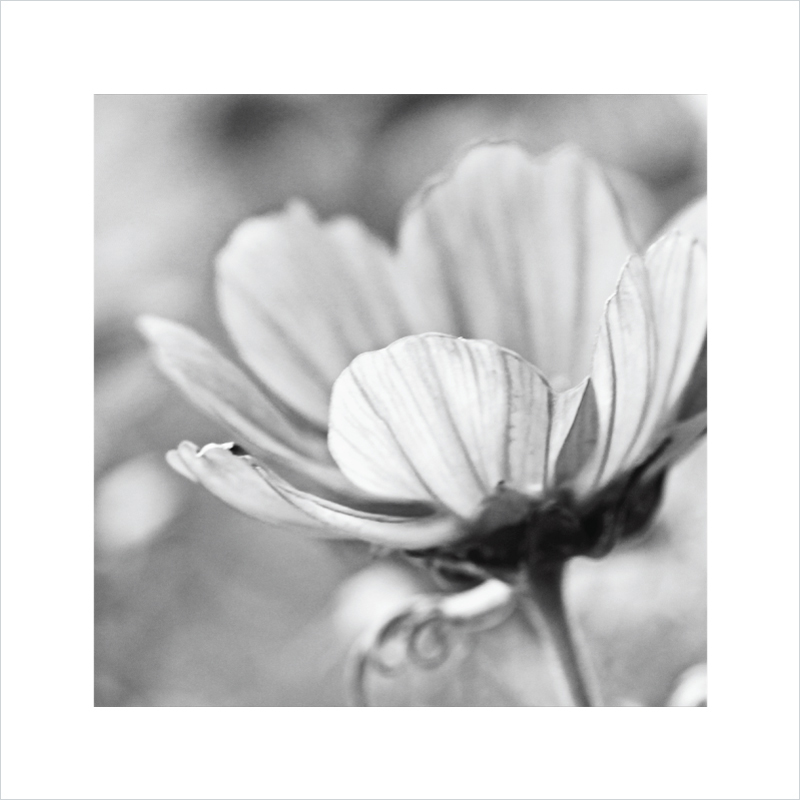 Flora-photographic-art-print