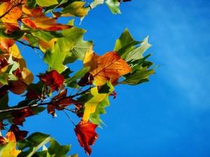 Bunte Herbstblätter strahlen am blauen Himmel - Deine Gefühle sind wertvolle Schätze - Hope and Shine