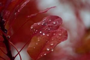 2 Herbstblätter zu sehen im Morgentau - Alle deine Gefühle sind wertvolle Schätze - Hope and Shine.at