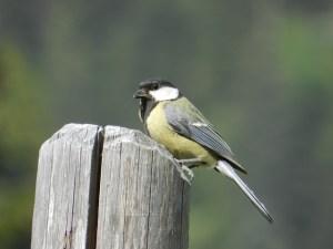 Ein Vogel sitzt am Zaunpfahl - hope and shine