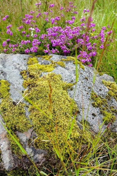 Rock with flowers